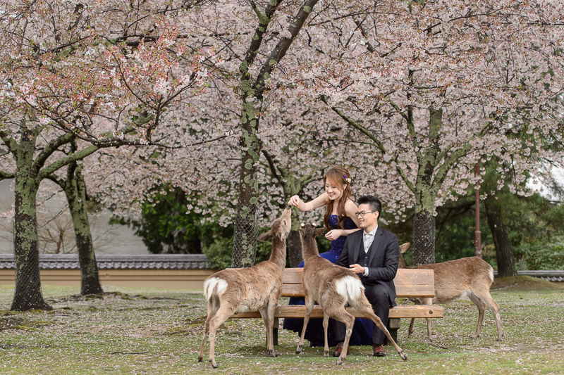 日本婚紗,京都婚紗,櫻花婚紗,婚攝守恆,新祕藝紋,cheri婚紗包套,cheri婚紗,KIWI影像基地,cheri海外婚紗,海外婚紗,DSC_6095