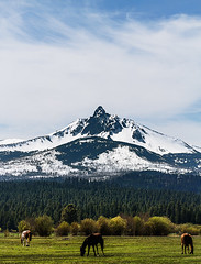 Black Butte Ranch (sethalanphoto) Tags: horses ranch mt washington mount mountain farm landscape black butte horse forest trees snow peak