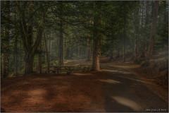 Forêt domaniale des Albères (jyleroy) Tags: forêt forest europe france pyrénéesorientales coldelouillat canon eos 700d rebel t5i arbre tree nationalgeographicgroup ngc paysage extérieur