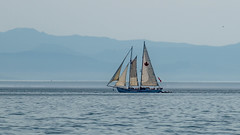 Canadian Sail (Ernie Steven Dickey) Tags: flickrunitedaward