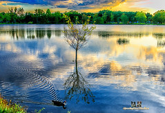 crestlake (SpookyBoo Studios) Tags: nik colorefexpro 7dmarkii canonef24105mmf4lisusm jimrobinson pinellas clearwater florida tree reflection