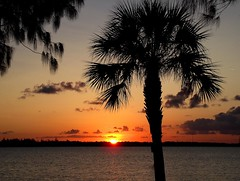 Sebastian Inlet Sunset (Barbacci) Tags: sunset usa tree nature evening bay twilight sundown sebastian florida outdoor dusk palm palmtree inlet nightfall