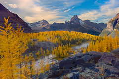 Opabin Plateau - Lake O'Hara (kevin mcneal) Tags: park autumn lake canada color fall seasons ohare national larches yoho canadianrockies