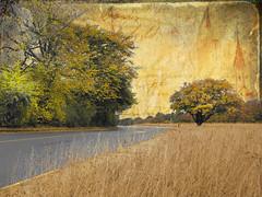 Autumn  series (Nick Kenrick.) Tags: autumn tree fall leaves golden october vancouverisland victoriabc photomix tatot creativephotocafe