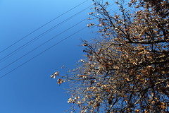 up (jamiehladky) Tags: sky tree wire wide cable lookingup cables telegraph queanbeyan jamiehladky hladky
