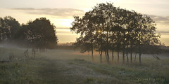 (yvonnepay615) Tags: uk trees mist nature sunrise lumix norfolk panasonic g1 45mm eastanglia pentney