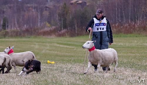"""Alexander Strøm og Glen deler • <a style=""""font-size:0.8em;"""" href=""""http://www.flickr.com/photos/75505532@N07/8089832250/"""" target=""""_blank"""">View on Flickr</a>"""