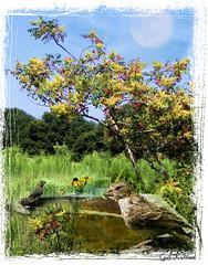 Wild Birds (gailpiland) Tags: wild nature birds photoshop soe flickraward gailpiland sweetfreedom flickrstruereflection1 flickrstruereflectionlevel1 rememberthatmomentlevel1