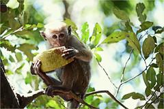 """Your take or my take"" (Kanishke Ganewatte Photography) Tags: world park portrait beautiful beauty or wide your national take srilanka geographic yala wilderness~yala me2youphotographylevel1"