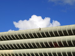 Bird at Preston Bus Station and Car Park (Tony Worrall) Tags: uk blue england sky urban building bird lines stone architecture modern concrete grey design fly interesting arch northwest grim curves © north shapes tony lancashire ribs council preston layers upnorth carpark iconic levels 2012 worrall grimupnorth prestonbusstation ©2012tonyworrall iconiccarpark modernnorth