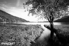 ". (claudio ""rekoaro"" asile) Tags: longexposure bw italy lake tree canon lago eos italia bn piemonte albero piedmont reko 2012 mergozzo 60d fotografinewitaliangeneration rekoart rekoaro"