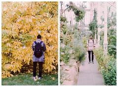 (mseab) Tags: autumn portrait kewgardens green nature yellow bleach conservatory 200 hue pathway asahipentaxspotmatic