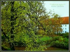 . . . vor dem Tore da steht ein Lindenbaum ( OJOS DE AGUA ) Tags: autumn oktober germany deutschland herbst alemania otoo brandenburg 2012 indiansummer oberhavel