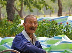 An Old Man Working in the Fields under Date Trees (rickihuang) Tags: china county old autumn portrait people man field rural three village year working chinese harvest henan laugh area farmer  date  wrinkle toothless  peasant     eighty                   neihuang
