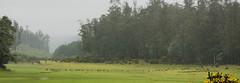 Ooty Meadows