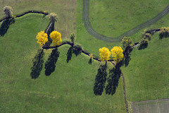 Autumn trees at a creek (Aerial Photography) Tags: shadow tree verde green yellow by creek an aerial bach gelb brook grn schatten baum vier luftbild luftaufnahme mittelfranken mfr autumntree herbstbaum bachlauf 6728 24102004 fliesgewsser fotoklausleidorfwwwleidorfde vgrothenburgobdertauber 20d02025 6728073 dornhausen geslau