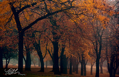 Foggy Minnehaha Park.... (JLC Photography Spokane,WA) Tags: park autumn trees fall leaves yellow fog washington spokane gloomy foggy spooky mysterious haunting hdr breathtaking minnehaha