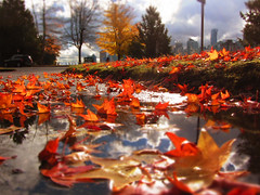 Puddle View (Mark Faviell Photos) Tags: park autumn fall leaves vancouver stanley ringofexcellence dblringexcellence