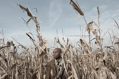 Growth 37/52 (ClaudiaJR) Tags: light black male photography corn natural handsome crop conceptual