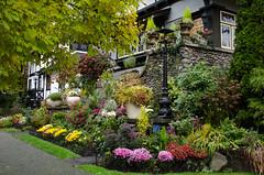 Lovely Flowers (Sherwood411) Tags: street flowers vancouver garden comox sherwood411