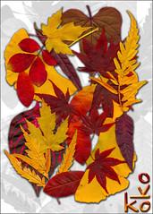 autumn leaves (Koko Nut, it's all about the frame) Tags: autumn colour leaves wonder koko scannedimage kokonut