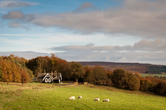 English autumn (ammgramm) Tags: uk autumn trees england sky field clouds farmhouse landscape evening sheep farm derbyshire naturallight autumnleaves hills moor autumnal chatsworth autumntrees eveninglight moorland 1755mm autumnalcolours d300s