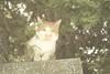 + (Nisa Yeh) Tags: japan cat kobe 神戶 oct27 北野異人館街 panasonicgf1 kitanoijinkangai