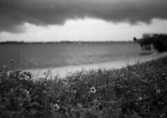 Storm I (canon ftbn + 50mm) (PositiveAboutNegatives) Tags: blackandwhite bw storm film rain analog canon 50mm florida kodak trix overcast darkclouds intercoastal stormyweather ftb intracoastal canonftb ftbn blackandwhitefilmphotography freefilmimages freefilmpictures