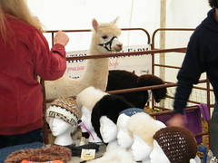"Alpacas at the Harvest Festival • <a style=""font-size:0.8em;"" href=""http://www.flickr.com/photos/33169774@N00/8348769810/"" target=""_blank"">View on Flickr</a>"