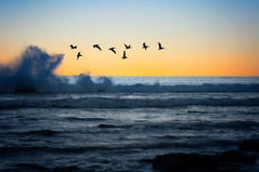 smell the sea and feel the sky, let your soul and spirit fly (pixelmama) Tags: california beach pelicans surf waves sandiego lajolla serendipity lajollashores vanmorrison inthemoment intothemystic scrippsbeach myhappyplace livefornow smelltheseaandfeelthesky letyoursoulandspiritfly pixelmama