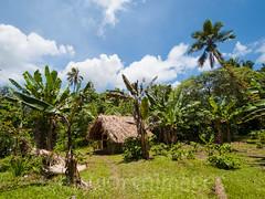 Village hut (whitworth images) Tags: travel house tree home garden outdoors pacific native traditional small banana bamboo hut southpacific tropical thatch lush vanuatu pandanus tanna imao imaio tafea imayo loanengo tannatafea