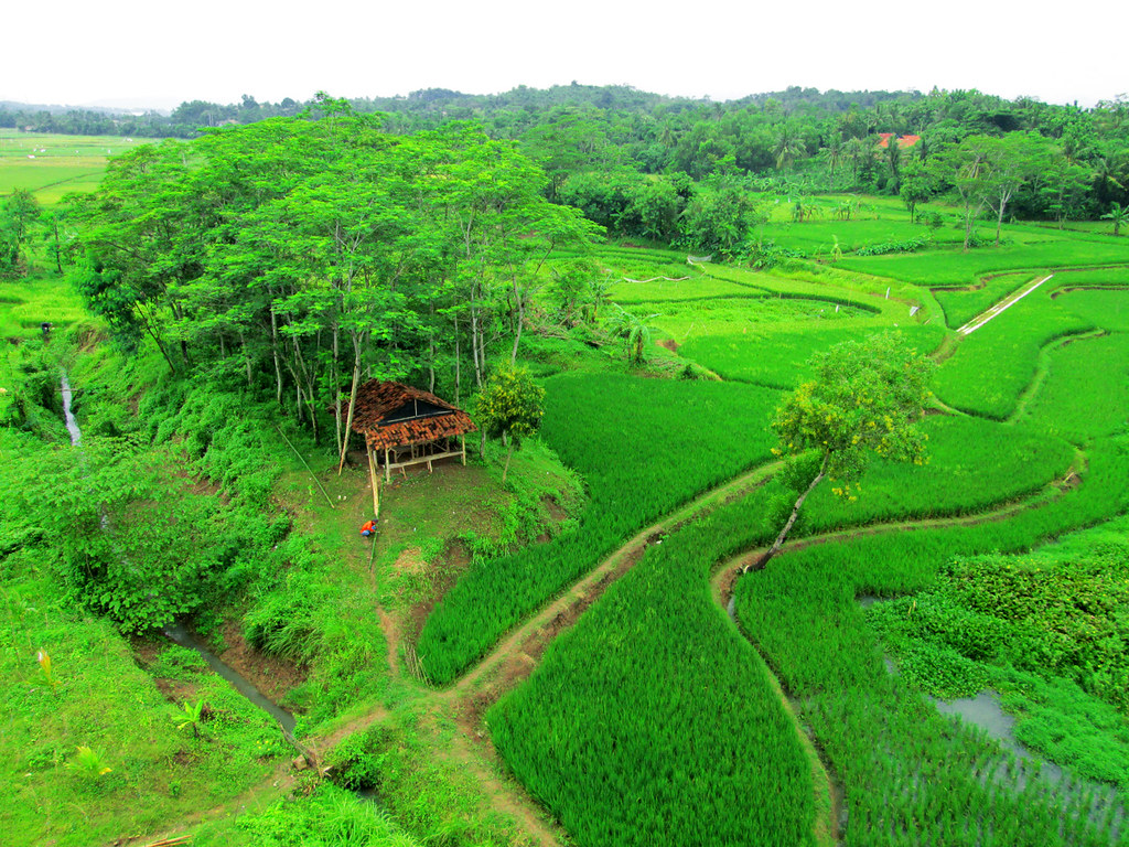 The Worlds Newest Photos Of Pemandangan And Sawah Flickr Hive Mind