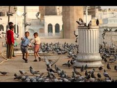 Take Some more.. EAT (Pattugrapher) Tags: feeding pigeons feed hyderabad charminar meccamasjid