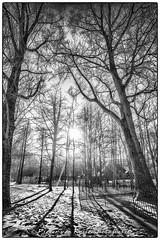 The light that casts the shadows (PvRFotografie) Tags: trees winter light blackandwhite sunlight snow tree nature licht bomen rotterdam zwartwit sneeuw nat boom lightshadow nex lichtval rotterdamzuid nex5 sonynex