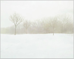 Fog in Winter (scilit) Tags: trees winter white snow fog forest landscape haze woods scenery 1001nights ei tistheseason silverywhite exoticimage besteverdigitalphotography