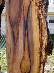 IMG_0466 (SDB777) Tags: wood beautiful big hues arkansas tones knots available hardwood hickory slabs coloration pignut bigwood spalt crotches spalting woodmizer pignuthickory hardwoodslabs woodmizerlt10