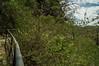 DSC03301 (Braulio Gómez) Tags: barrancadehuentitã¡n biodiversidad caminoamascuala canyon canyonhuentitan faunayflora floresyplantas guadalajara jalisco mountainrange naturaleza sierra senderismo paisaje barrancadehuentitán barranca huentitán ixtlahuacandelrío méxico guardianesdelabarranca