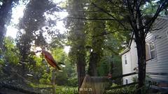 20150519 0656 - Mazda3 - leaf escapes wiper-death JUST in time - 06530001.avi (Rev. Xanatos Satanicos Bombasticos (ClintJCL)) Tags: video avi 20150519 201505 2015 virginia alexandria clintandcarolynshouse yard frontyard street broad driving commuting vehicle car mazda mazdacar mazdamazda3 mazdamazda3car mazda3 carolyn windshieldwiper windshieldwipers wiper wipers windshield dashcam leaf