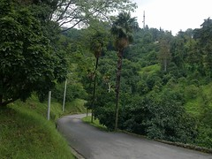 Botanical_Garden_Batumi (3) (Sasha India) Tags: travel georgia journey jardimbotnico botanicalgarden jardinbotanique batumi   gorgie excurso acara    adjara      botanikbahesi         grcstan        nbatatba          acarstan sfr