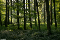 mystic place (picturesbywalther) Tags: place platz mystic mystisch nature wald forest landscape landschaft outdoor bume trees wood holz