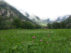 20150920_095552 (coldgazemedia) Tags: photobank stockphoto scenery schweiz switzerland swissvillage swissalps landscape naters brig blatten alps mountain swisshuts alpine alpinehut bluesky blue green grass grassland pasture meadow