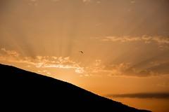 Start to the day (bejanalizadeh1) Tags: sunrise croatia brac island orange birds day start glow nature naturallight cloud sky bol sun yellow startofday canoneos explore flikr peace bird flying