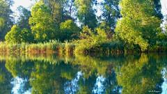 Riflessi estivi sulle acque del Po (BORGHY52) Tags: fiume fiumepo po river carignano provinciatorino provinciaditorino italy piemonte estate luglio riflessi riflesso alberi landscaepe waterscape vegetazione verde