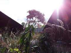 Framed nature (Kuba Skalimowski) Tags: planting garden architecture pavilion serpentinegallery london hydepark peterzumthor