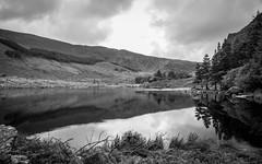 Glanteenassig Lake (P i a :)) Tags: glanteenassiglake glanteenassigforestpark ireland kerry irishlandscape landscapephotography monochrome blackandwhite blackandwhitephotography