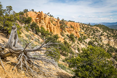 Dead Tree and Hoodoos (Serendigity) Tags: brycecanyonnationalpark deadwood outdoors usa unitedstates landscape utah nature