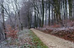 der erste Schnee (welenna) Tags: switzerland autumn wald forest weg weather wetter weiss