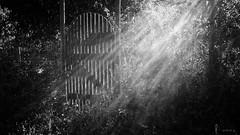 outside of paradise (light-square) Tags: outsideofparadise auserhalbdesparadieses nature sun sonne monochrome schwarzweis blackandwhite leicax2 creative