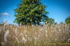 Cottonweed (Jeremy Schumacher) Tags: cottonweed froelichia floridana wildflower prairie flower white landscape nature wilderness nikon d5000 40mm