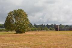 Fort Vancouver Natl Historic Site - Fort Orchard and Bastion (jrozwado) Tags: northamerica usa washington vancouver fortvancouver nationalpark historicsite orchard apple bastion fort museum livinghistory